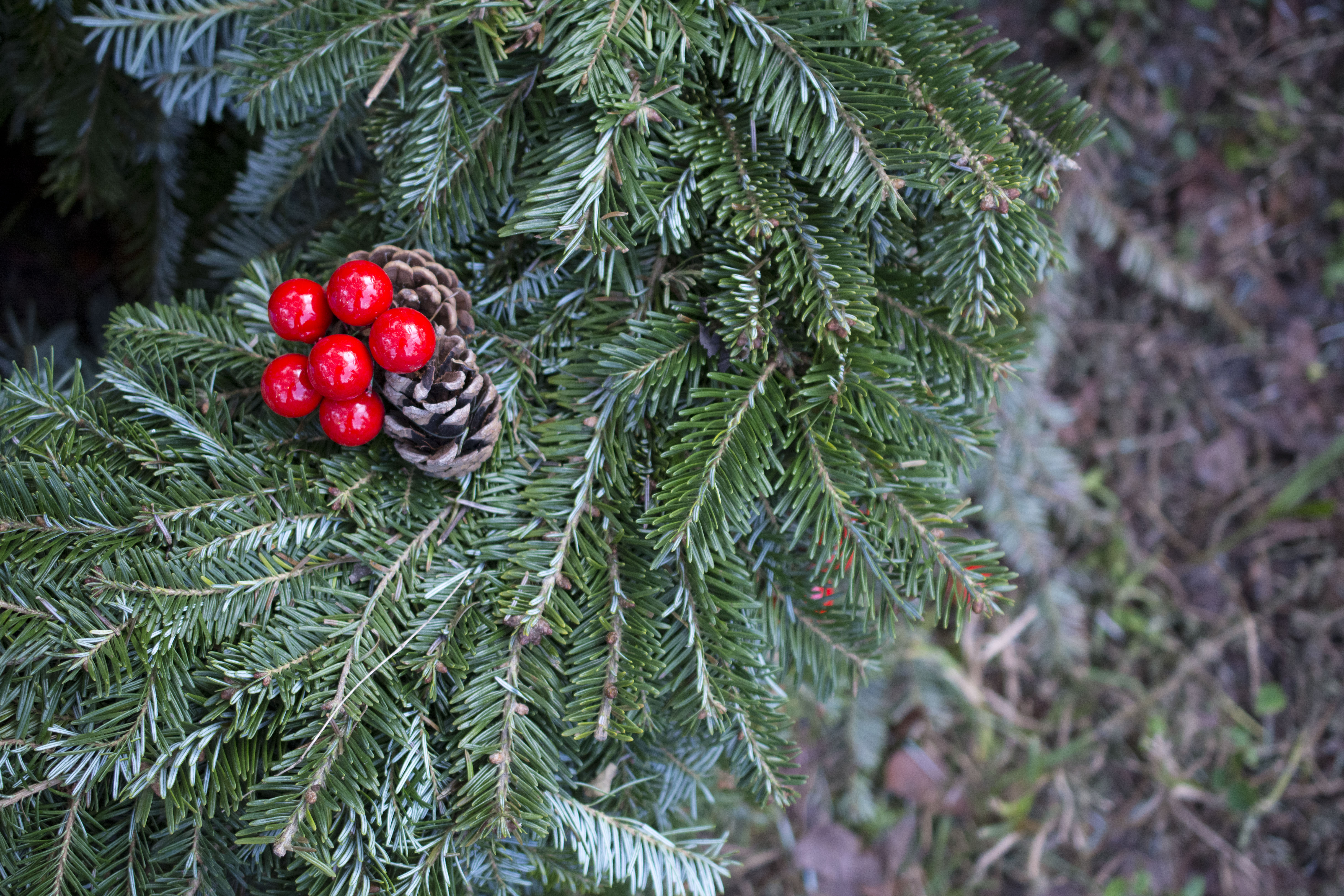 How To Save On Your Christmas Tree   Coupon Included